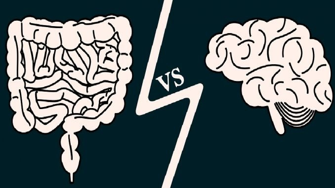 how are the gut and brain linked?